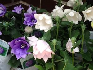 お花の入荷