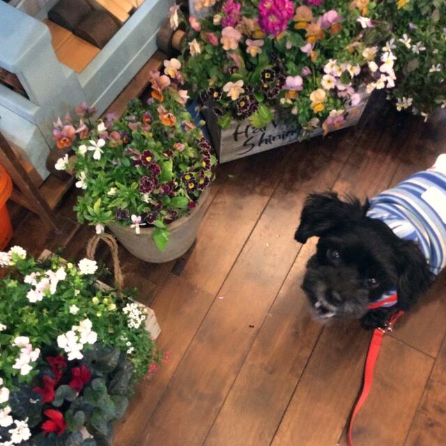 お花の販売再開と 休日のお知らせ