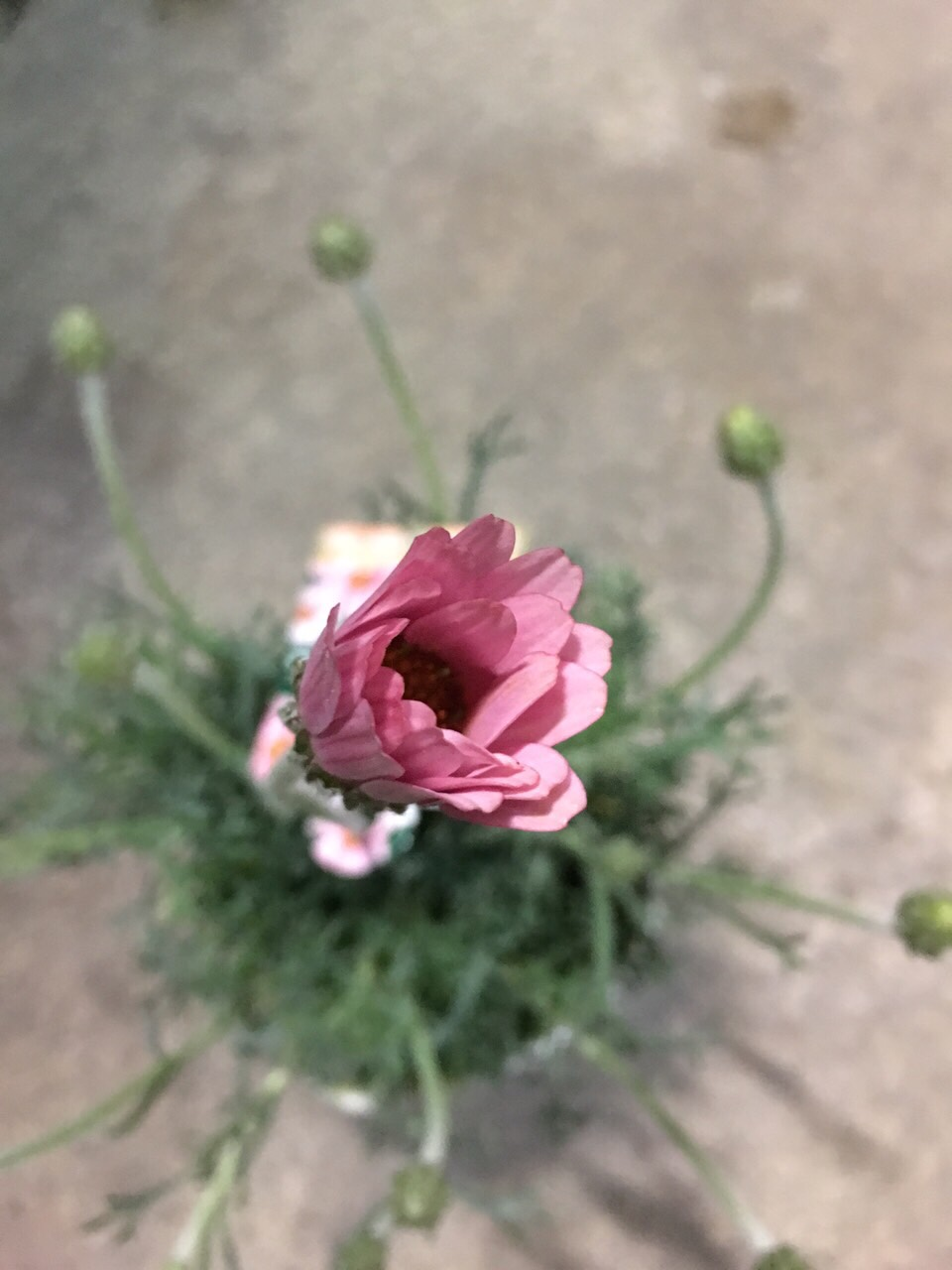 奈良王寺雑貨屋ぎんのいす、お花