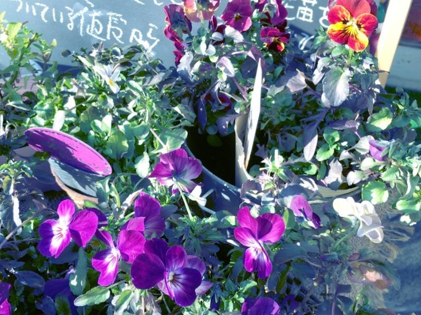 奈良王寺・お花の並ぶ雑貨屋 ぎんのいす